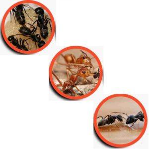 Μυρμηγκοκτόνα